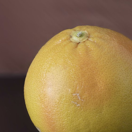 Link to shop item: Grapefruits