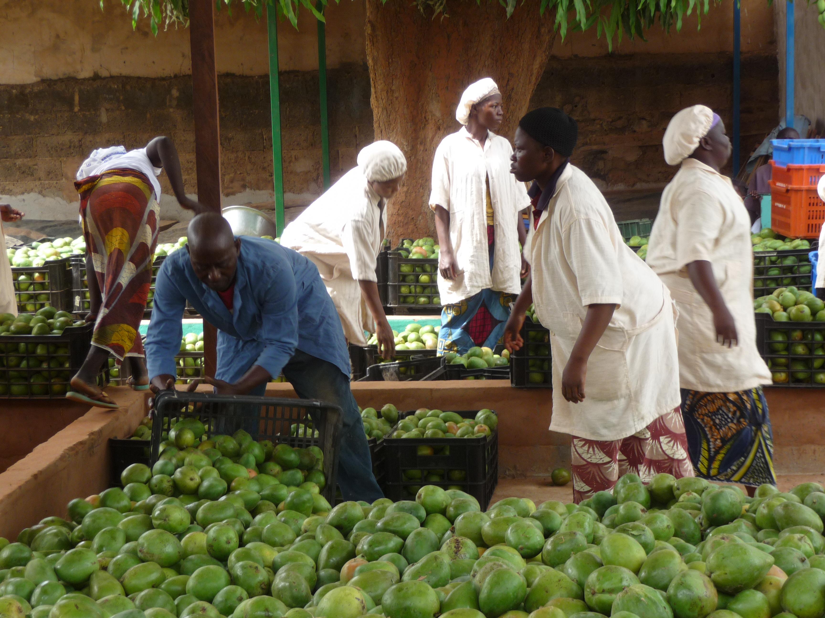 Neustart in Burkina Faso - Process - gebana AG